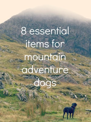 8 essential items for mountain adventure dogs